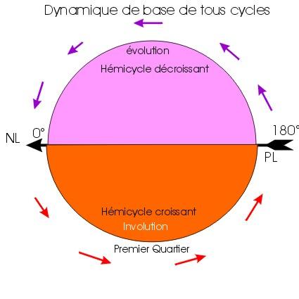 Dynamique du cycle